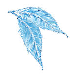 Leaf made of water splash Stock Photography