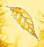 Leaf made of water splash gold color Royalty Free Stock Photo