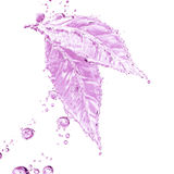 Leaf made of water splash. Pink color Stock Photography