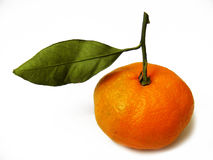 Leaf and mandarin pictures suitable for logo and advertisement design. 2 Stock Image