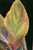 Leaf of Many Colours Royalty Free Stock Image