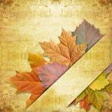 Leaf maple on background grunge Stock Photos