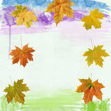 Leaf maple  on background watercolor Stock Image