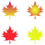 Leaf maple isolated background Royalty Free Stock Image
