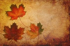 Leaf, Maple Leaf, Autumn, Texture stock photography