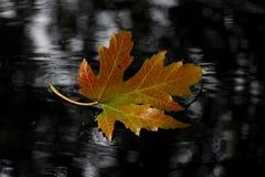 Leaf, Maple Leaf, Autumn, Tree