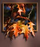 Leaf, Maple Leaf, Autumn, Tree royalty free stock images