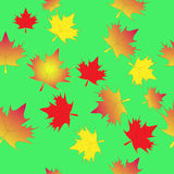 Leaf maple seamless background Royalty Free Stock Photo