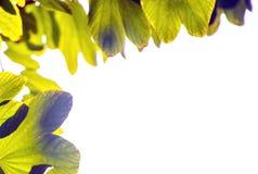 Leaf margin Stock Images