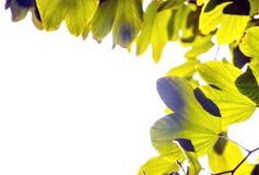 Leaf margin Royalty Free Stock Photography