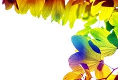 Leaf margin Stock Photo