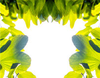 Leaf margin Stock Photography