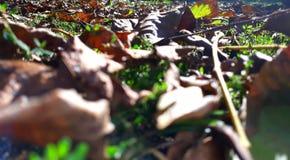Leaf mat stock images