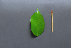 Leaf and match stick. Concept of creation and destruction stock photography