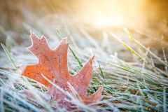 Leaf med frost royaltyfri fotografi