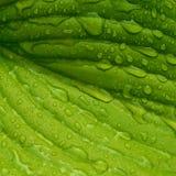 Leaf med raindrops Våt bladnärbild royaltyfria bilder