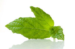 Leaf mint Royalty Free Stock Photography
