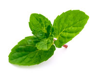 Leaf of mint. On white background Royalty Free Stock Photography