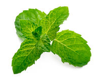 Leaf of mint Royalty Free Stock Photos