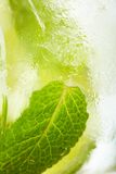 Leaf mint and cut citrus in ice Stock Photography