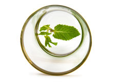 Leaf mint on glass. Leaf mint Lдes at bottom on glass Royalty Free Stock Photos