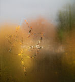 Leaf on misted window. Maple leaf on misted window painted by finger Stock Image