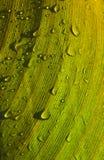 leaf moist 图库摄影