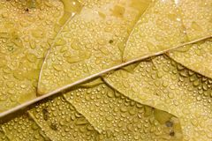 Leaf with moisture. Detail of leaf with moisture Stock Photo