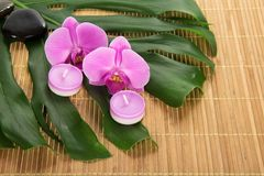 Leaf of a monstera, orchid, candle and stones Stock Image