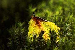 A leaf and a moss Royalty Free Stock Image