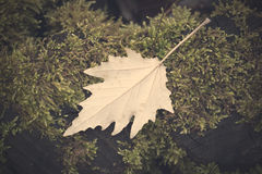 Leaf on the mossy tree Royalty Free Stock Photography