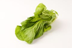 Leaf mustard Stock Photography