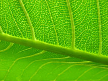 Leaf n' Cells Stock Image