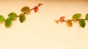 Leaf na ścianie, bluszcz na ścianie fotografia royalty free