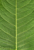 Leaf natural background stock images