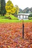 Leaf, Nature, Autumn, Water