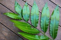 Leaf nature background Stock Photography