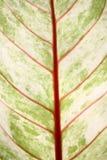 Leaf nature background Stock Photo