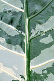 Leaf Nature Background Stock Images