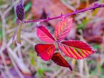 Leaf. Nature color leaf macro background autumn land Stock Images