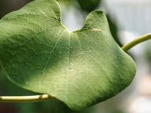 Leaf, the nature creature we have seen everyday. Common things should be feel with Stock Photography
