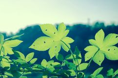 Leaf. Nature green summer relax Stock Images