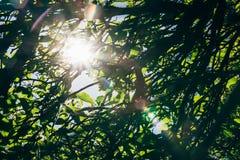 Leaf, Nature, Green, Vegetation royalty free stock photo