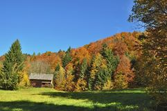 Leaf, Nature, Sky, Ecosystem Stock Images