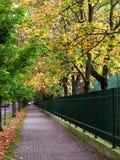 Leaf, Nature, Tree, Green Stock Photo