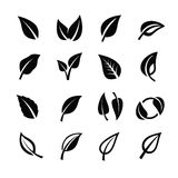 Leaf nature vector Stock Image