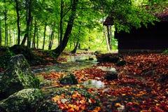 Leaf, Nature, Vegetation, Water royalty free stock photos