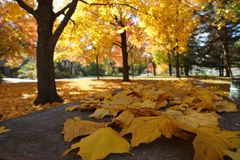 Leaf, Nature, Yellow, Autumn royalty free stock images