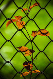 Leaf and net with sunny Stock Image
