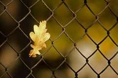 Leaf and netting Royalty Free Stock Images